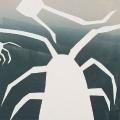 plankton-species